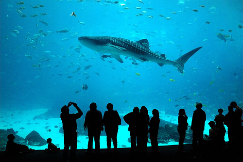 Sharks are going extinct here 39 s what you can do to stop Aquarium in georgia
